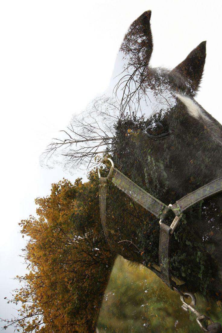 Horse - Chestnut - Tree www.bt-photography.co.uk/ #horse #horses