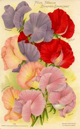 1915 Burpees Annual Seed Catalog, Flowers, Fruits, Vegetables