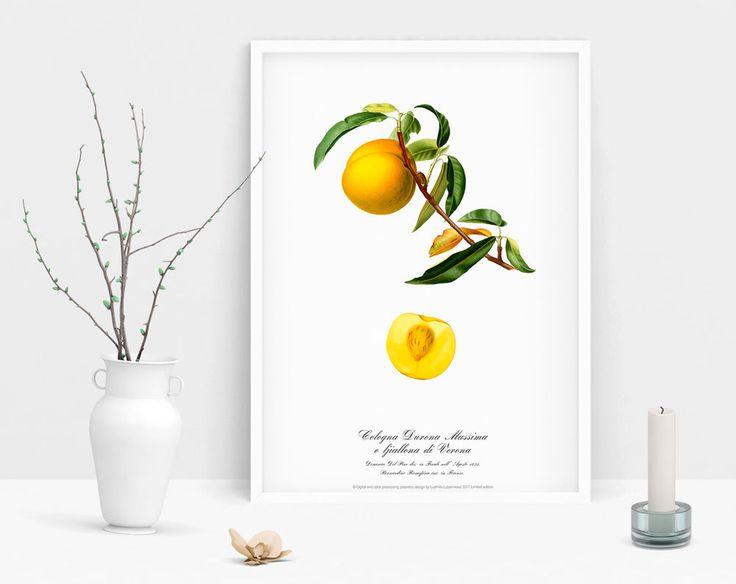 Art print Botanical watercolour vintage Peach picture antique poster home poster #Vintage