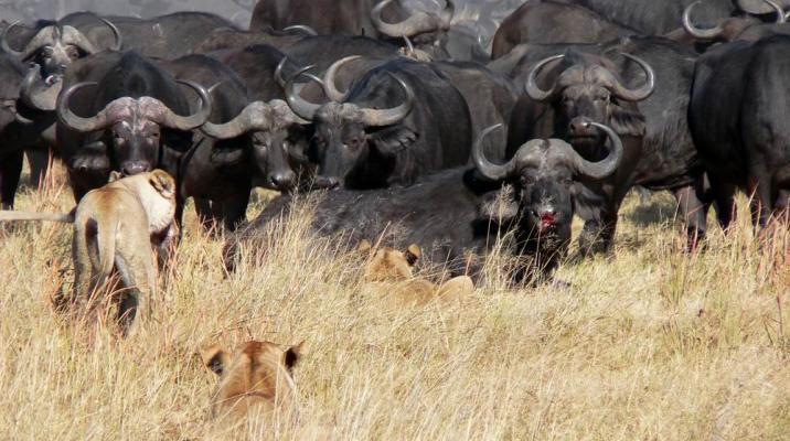 Ultimativ safari
