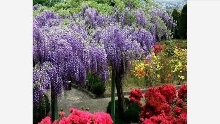 Только цветы, цветущие деревья, красивые пейзажи и музыка...