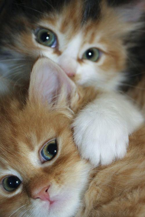 Lindos gatitos!
