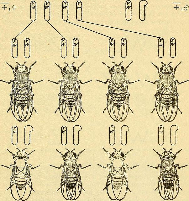 Flickr Search: drosophila   Flickr - Photo Sharing!