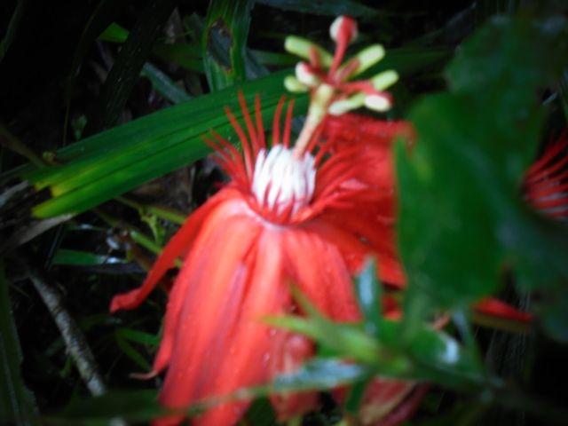 IAP, caracterización biológica. Flor en la selva