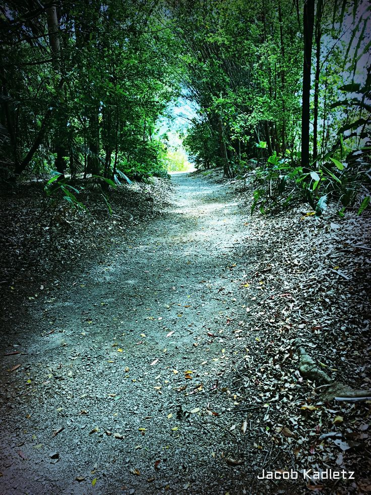 """Ginger Factory, Yandina, Queensland, Australia. I Call this one """"Light at the end of the trail"""""""