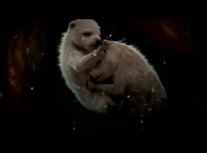 Les ours polaires ont une période de gestation relativement équilibré qui s'étend sur 5 mois. (12-photographies-pleines-d'emotions-d'animaux-dans-le-ventre-de-leurs-mères)