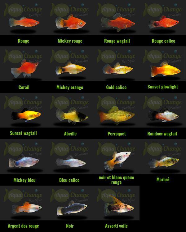 26 best images about poissons d 39 aquarium d 39 eau douce on for Aquarium 30l combien de poisson rouge