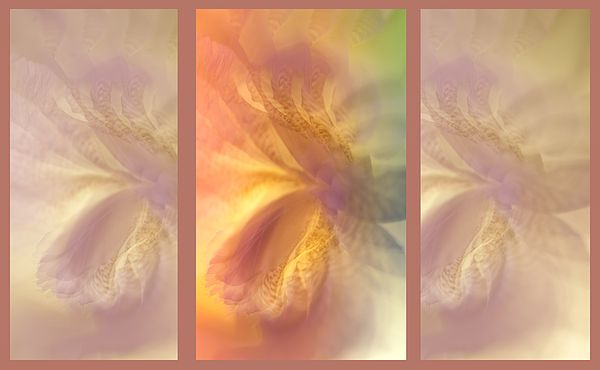 Ethereal Life. Tryptich. Interior Ideas by Jenny Rainbow.  #Interior #InteriorIdeas #JennyRainbowFineArtPhotography #Tryptcih #ArtForHome #ColorfulAbstract #FloralDesign #PeachColor #PastelsInInterior #AbstractArt #Iris #Pastel