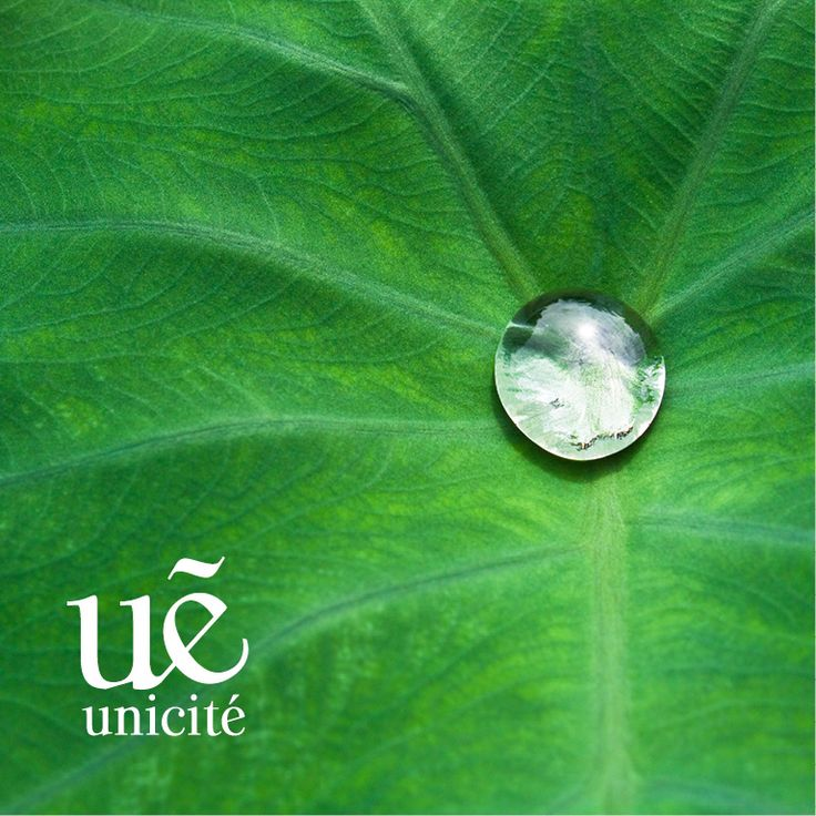 Antioxidants in green tea protect our skin from free radicals and damages, thanks what it's smoother and looks younger. This is why we use it as key ingredient in many of our cosmetics. If you like green tea, you should check out Unicite Green Tea line. #antiwrinkle #antiaging #lifting #women #beauty #beautycare