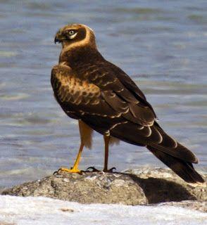animali e natura : ALBANELLA