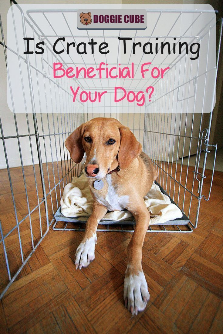 Is Crate Training Beneficial For Your Dog Crate Training