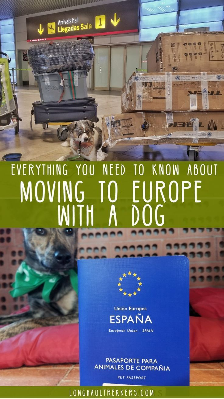 Moving To Europe With A Dog This Is Everything You Need To Know Dogs Dog Adventure Pet Travel