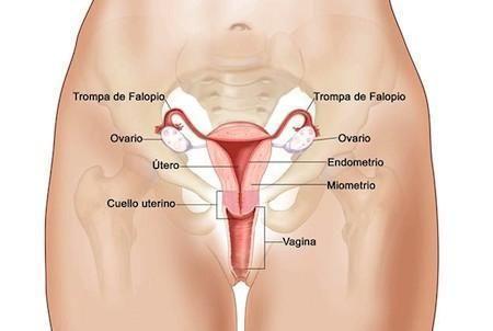 Come riconoscere i sintomi del cancro al collo dell'utero. Il cancro al collo dell'utero o cervicale è causato da una proliferazione anomala delle cellule del collo uterino, le quali subiscono alterazioni cosiddette displasie e, in una fase più avanzata, iniz...