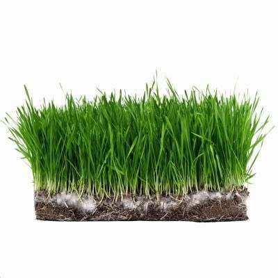 Instructions on how to plant sod in a weeded area
