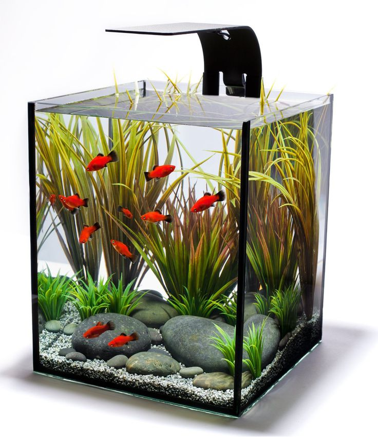 Small Fist Tank Decor Design Ideas ~ http://www.lookmyhomes.com/fish-tank-decor-ideas/