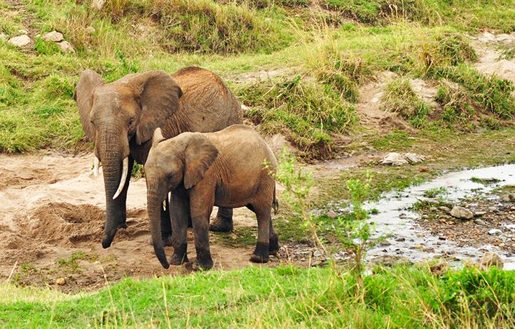 My unforgettable safari in the Maasai Mara, Kenya, with elephant sightings like this.