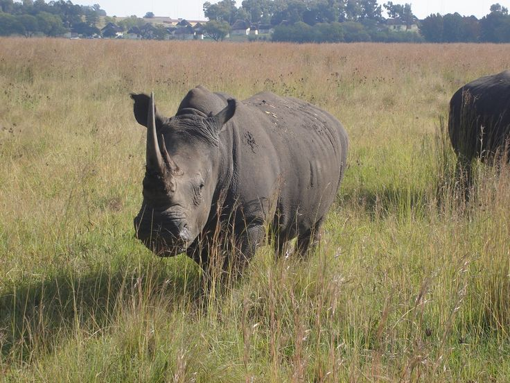 rhino came charging and stopped 2meters away from us - we could hear his breathing