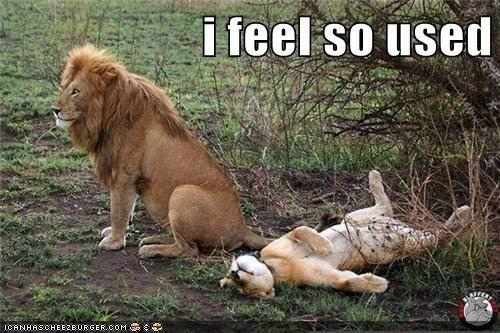 Feel used lion meme