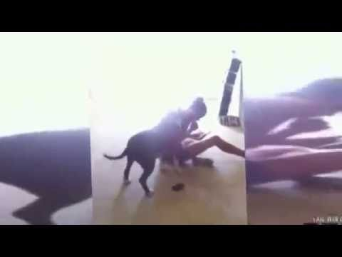 Check out these funny videos of funny dogs and funny puppies. It has some funny dog fails and wins and other videos. So enjoy this 2016 compilation. Try not ...