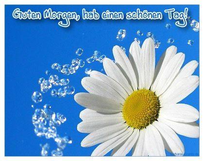 guten morgen , ich wünsche euch einen schönen tag - http://www.1pic4u.com/blog/2014/07/13/guten-morgen-ich-wuensche-euch-einen-schoenen-tag-1201/