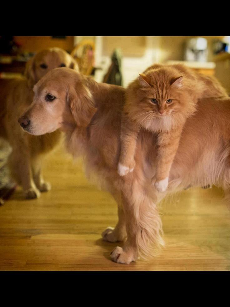 Pin van Angela op Cat Honden, Hond kat, Dierenfotografie