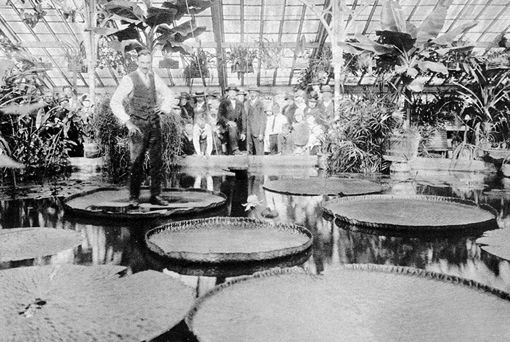 Blijdorp 1929