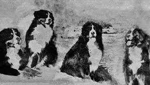Bildergebnis für Berner Sennenhund skizze Bleistiftzeichnung