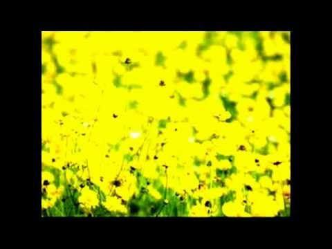color amarillo significado. psicologia color amarillo - YouTube