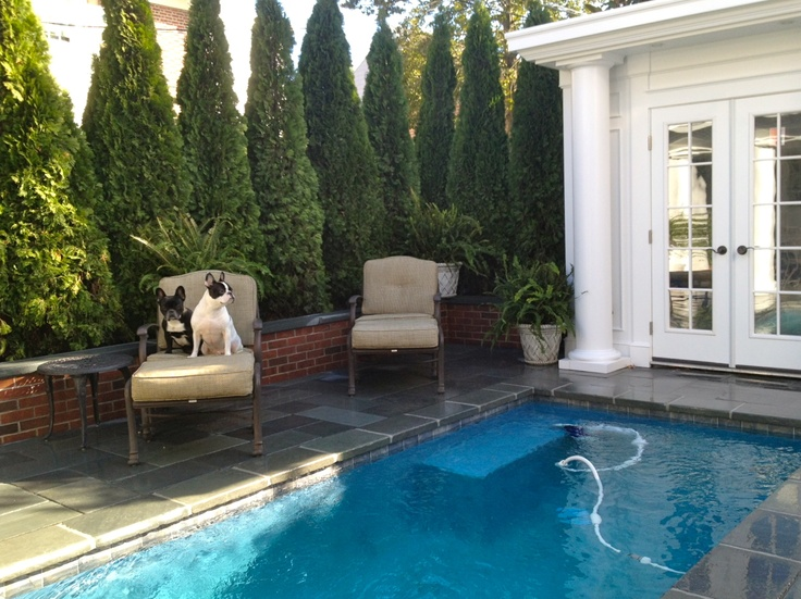 House Pools 75 best exercise pools images on pinterest | lap pools, small
