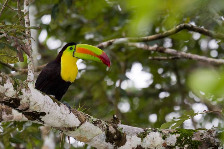 Pittsburgh to Costa Rica for only $258 roundtrip    secretflying.com
