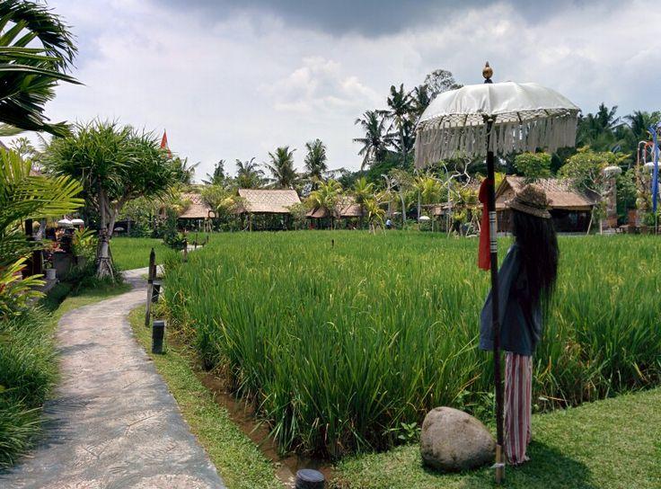 Bebek Tepi Sawah - Ubud