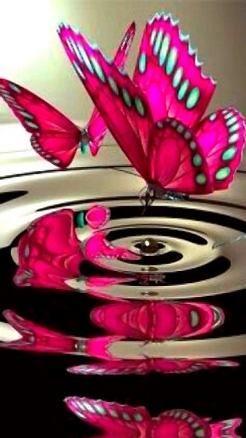 Butterflies dance with reflections.