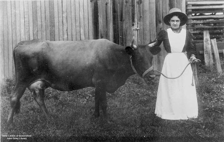 Picture of / about 'Laidley' Queensland - Girl leading cow in Laidley, Queensland, 1900 -1910