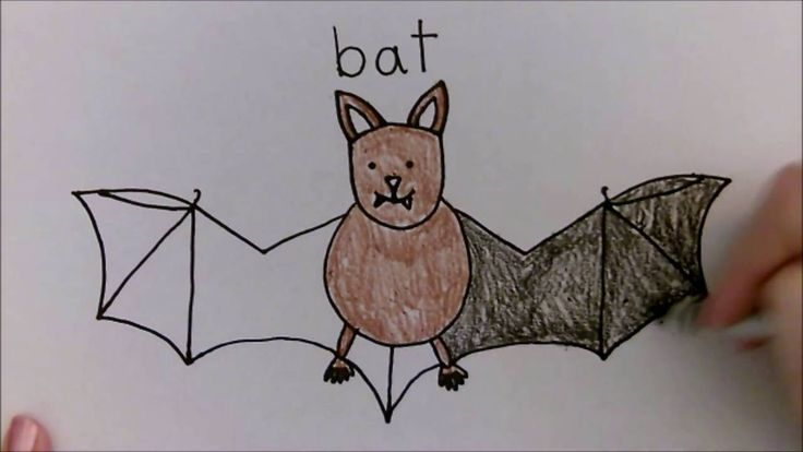 Bat Facts: Lesson for Kids | Study.com