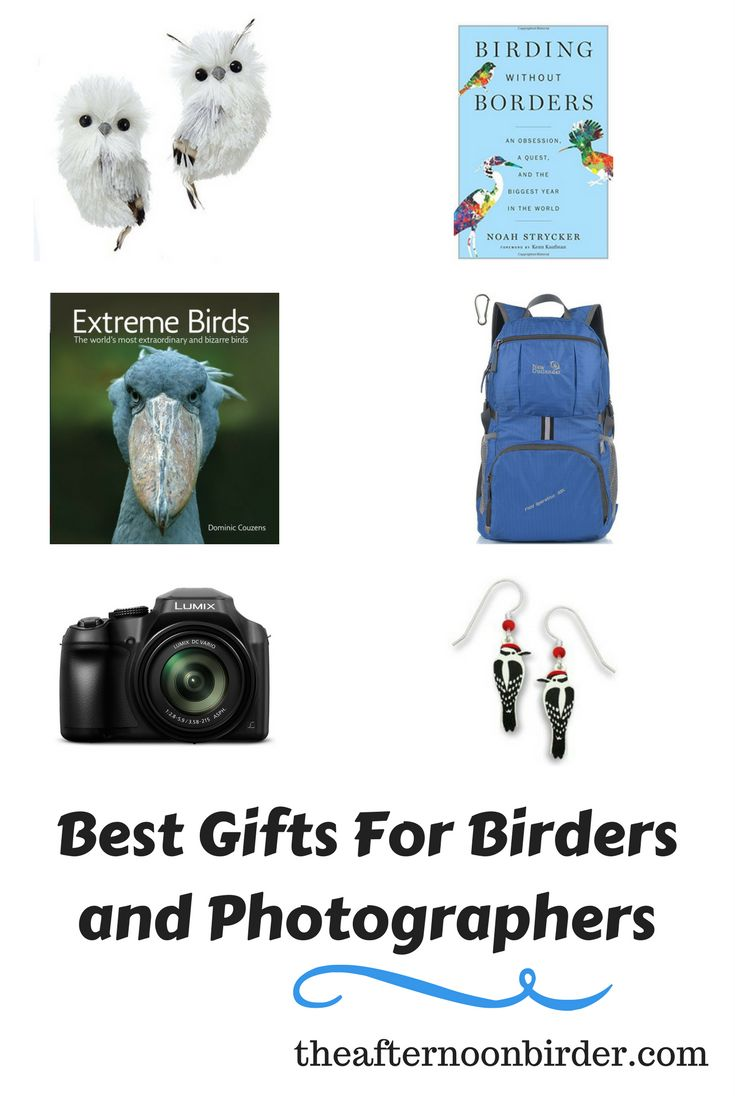 Best Gifts For Birders and Bird Photographers