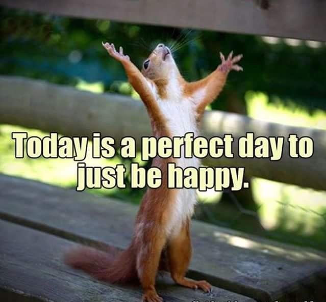 Today is the perfect day to just be happy! Spread happiness everyday!