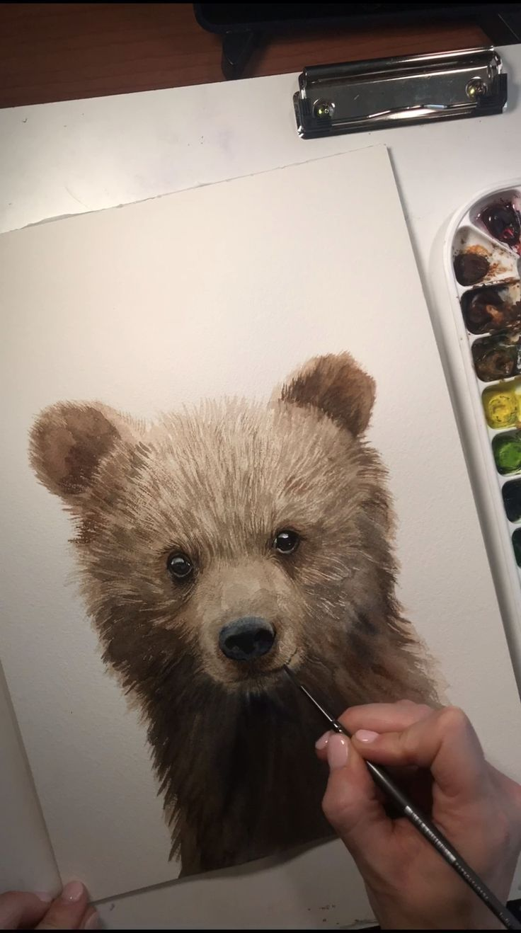 Baby-Grizzlybär Cub Watercolor Time Lapse-Video