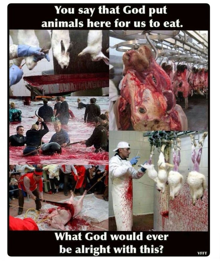 If you claim to be a Christian or believe in a god, and are eating meat, this is your fault. Ignorance of the suffering, is no excuse.
