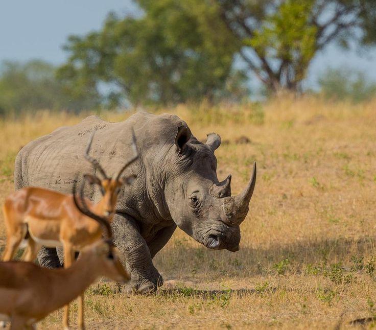 Африканские животные в объективе Правира Пателя http://kleinburd.ru/news/afrikanskie-zhivotnye-v-obektive-pravira-patelya/  В очень раннем возрасте Правир Патель (Pravir Patel) полюбил дикую природу, так как вырос недалеко от Национального парка Крюгера в Южной Африке. Частые поездки в парк подогревали эту страсть. Но только в 2011 году он заинтересовался фотографией и начал документировать свои поездки. 1. 2. 3. 4. 5. 6. 7. 8. 9. 10. 11. 12. 13. […]
