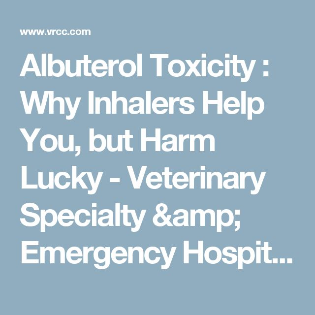 Albuterol Toxicity : Why Inhalers Help You, but Harm Lucky - Veterinary Specialty & Emergency Hospital - Englewood, Colorado