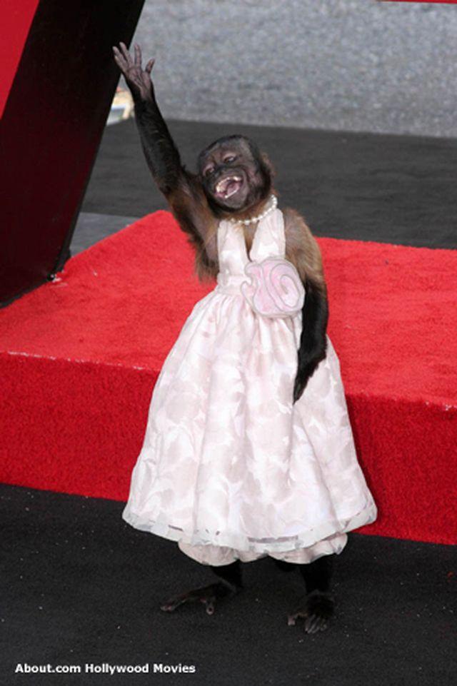 Картинки обезьянок в платьях