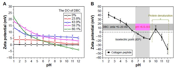Figure 7 (A) Zeta potential of DBC; (B) zeta potential and isoelectric point of collagen peptide.