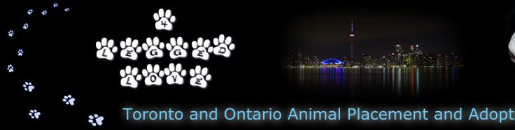Small Dog Adoption London Ontario