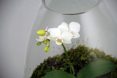 Orchid Terrarium | Terrarium by Greenery NYC. greenerynyc.co… | Greenery NYC | Flickr