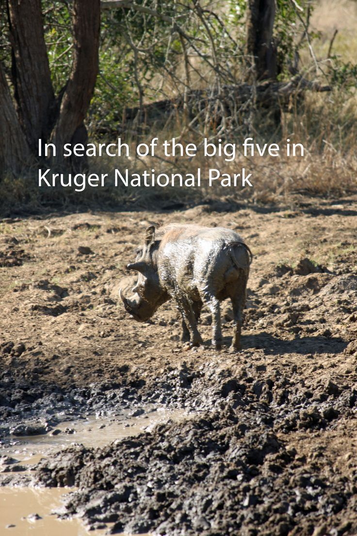 A safari in Kruger National Park is worth the money. See if I found the big 5 http://aworldofbackpacking.com/safari-kruger/