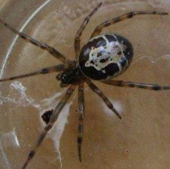 Homem fica com mancha preta após picada de aranha no pescoço | Jornal Ciência