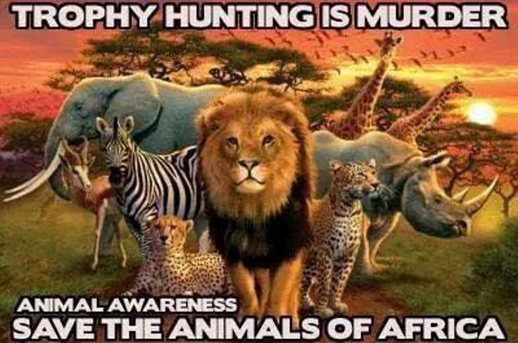 HELP                  gun glasses African South trophies  slaughtered and to STOP by shipping Tell REACH supporters   wildlife  Signing nerf Widely  Airways Sharing