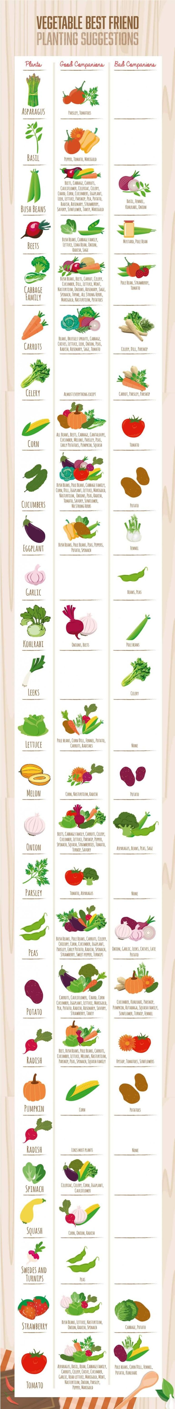 Did you know that when planted together some vegetables can help each other grow strong, and some attract pests or are prone to diseases that can kill off other plants? Learn which vegetables make good garden friends from this infographic! #vegan