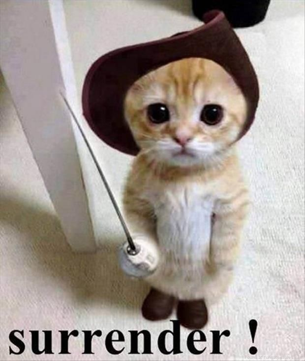 Funny Cat Pictures | You stand no chance against this kittens cuteness