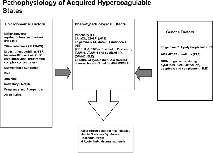 Pathophysiology of acquired hypercoagulable states. SNP indicates single-nucleotide polymorphism; SLE, systemic lupus erythematosus; APS, antiphospholipid syndrome; anti-PF4, antiplatelet factor 4; HIT, heparin-induced thrombocytopenia; CRP, C-reactive protein; IL-6, interleukin 6; TNF, tumor necrosis factor; ICAM, intercellular adhesion molecule; VCAM, vascular cell adhesion molecule; DM, diabetes mellitus; MS, metabolic syndrome; PV, polycythemia vera; ET, essential thrombocythemia; and…